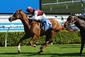 Miniature figures as outright second favourite for success in the 2014 TAB Rewards Plate. Photo: Steve Hart