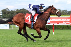 Charlevoix has been confirmed in the 2016 SA Derby field. Photo: Ultimate Racing Photos
