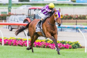 Darren Weir is chasing his second straight win in the Hobart Cup with First Bloom after winning last year's race with Hurdy Gurdy Man.