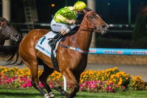 Platelet is currently favourite in 2014 Irwin Stakes betting markets.