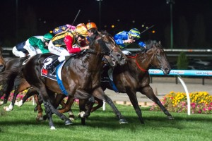 Spirit of Boom in Hacer Group William Reid Stakes at Moonee Valley on 21 March 2014. Picture by: Race Horse Photos Australia.