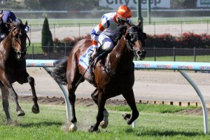 Le Roi is reportedly primed for success in the 2014 Moonee Valley Cup. Photo: Race Horse Photos Australia