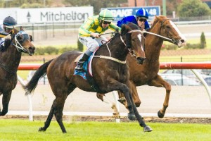 Ava's Delight will tackle the 2014 Eliza Park International Stakes  following a winning season.