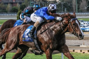 Wild Rain currently leads 2015 Lightning Stakes betting markets. Photo: Adrienne Bicknell