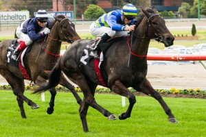 Gregers will resume in this afternoon's Australian Defence Force Handicap at Caulfield