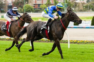 Betting Odds – Moonee Valley Fillies Classic 2013