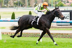 Commanding Jewel has been confirmed in the final field for the 2014 Stocks Stakes