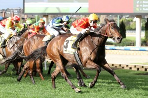 2016 Moonga Stakes Tips and Betting Preview