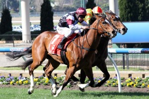 Oliver Confident in Manikato Stakes Chances of Angelic Light