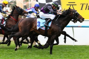 Fiorente will be Gai Waterhouse's only representative in the 2013 Cox Plate at Moonee Valley on Satruday.