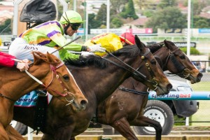Solicit will make her 2014 debut in the Group 3 The Vanity on Saturday