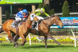 Scratched 2014 Caulfield Cup horse Dear Demi