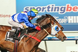 Dear Demi (outside) has drawn barrier one in the Caulfield Stakes this Saturday.