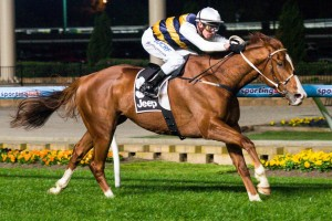 Jarrod McLean's Blackie will enjoy the inside run from barrier one in the Australia Stakes this Saturday.
