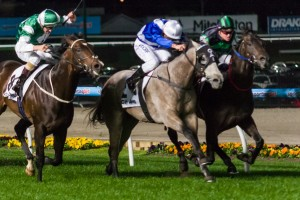 Trainer Peter Snowden has revealed Cluster (outside) will target the 2014 Epsom Handicap