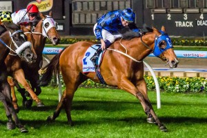 Buffering (pictured in the Moir Stakes) produced a typically strong effort to win the 2015 Winterbottom Stakes. Photo: Race Horse Photos Australia