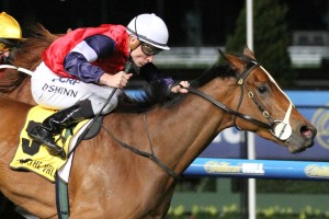 2016 Sunline Stakes Tips and Betting Preview