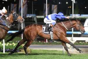 Sovereign Nation was too good for his rivals in the Group 2 Bill Stutt Stakes at Moonee Valley this evening. Photo: Ultimate Racing Photos