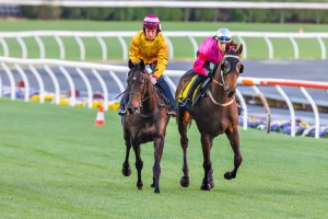 Atmosphere (inside) is the latest rising talent to be sold to Hong Kong.