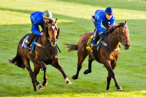 Gouldian (inside at a track gallop)