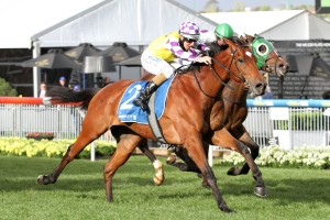 2016 Moonee Valley Vase Winner Sacred Elixir onto VRC Derby