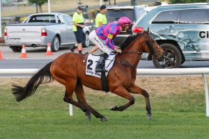 Fast 'N' Rocking was one of four gallopers on trial for David Hayes & Tom Dabernig on Friday morning.