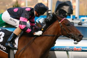 Spinderbella will face her toughest test to date in the Ballarat Cup on Saturday, for which she is the favourite.