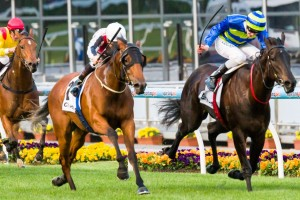 Gypsy Diamond (outside) will start from barrier six in the 2014 Angst Stakes at Randwick.