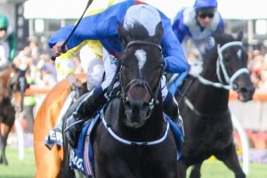 Cox Plate winner Adelaide will target the 2015 Queen Elizabeth Stakes through autumn. Photo: Sarah Ebbett