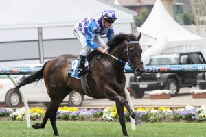 Fontiton is one of 104 juvenile horses nominated for the Sires Produce Stakes at Randwick on April 4.