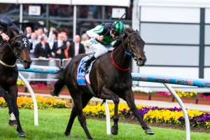 Shamus Award will face Group 1 winners Foreteller, Polanski, Hawkspur and Moment Of Change in the 2014 Orr Stakes at Caulfield on Saturday.