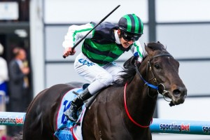 2013 Cox Plate Results – Shamus Award Wins