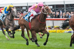 2013 Blue Diamond Stakes Failure Crack A Roadie Shin Sore
