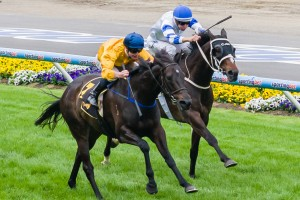 Silent Achiever (yellow and blue silks) has the ideal barrier of 5 for the 2013 Caulfield Cup.