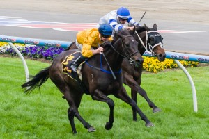 Silent Achiever has been one of the best backed runners in 2013 Caulfield Cup betting markets.