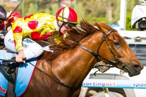Coronation Shallan will not contest the 2014 Listed Hareeba Stakes today