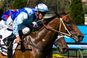 Trainer John Hawkes is confident of a strong performance from Zephyron in the 2014 Brisbane Cup