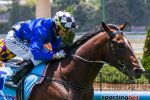 Trainer Mark Kavanagh has revealed Chivalry will be set for the 2014 Caulfield Guineas