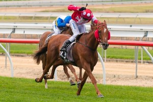 2013 Adelaide Cup Results – Winner Is Norsqui