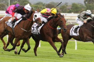 Outback Joe wins the Adelaide Cup 2014 from Black Tycoon (outside)