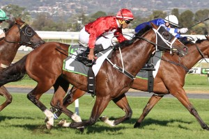 Nostradamus is our tip to win Saturday's 2016 DC McKay Stakes at Morphettville. Photo: Jenny Barnes
