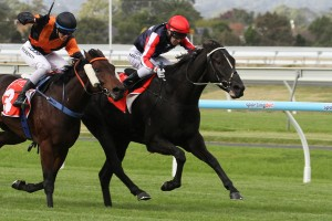Leon Macdonald is confident in the chances of Gamblin' Guru in the 2014 SA Derby