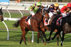 Thermal Current currently occupies the second line of 2016 DC McKay Stakes betting. Photo: Jenny Barnes