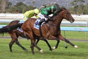 2013 Brisbane Cup Possibility for Motivado