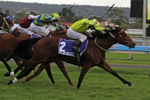 Platelet storms home to win the 2013 The Goodwood Handicap. Photo by Jenny Barnes.