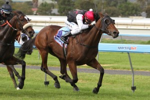 2013 SA Fillies Classic Results – Wowee Wins