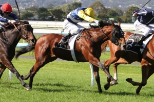 Lotion is eyeing a berth in the 2014 Victoria Derby. Photo: Jenny Barnes