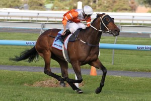 Star Rolling was a big winner at Wednesday's Epsom Handicap barrier draw; allocated the ideal gate 2