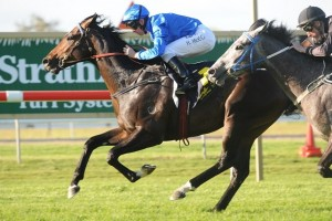 Sweynesse is clear favourite for success in 2014 Gloaming Stakes betting markets