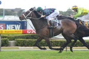 Betting Update – 2013 Colin Stephen Quality